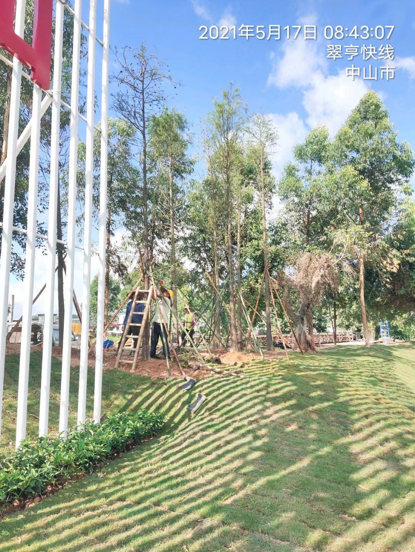市政城市绿化